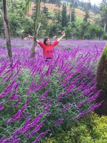 Mùa hoa oải hương ở thung lũng Bắc Hà 1