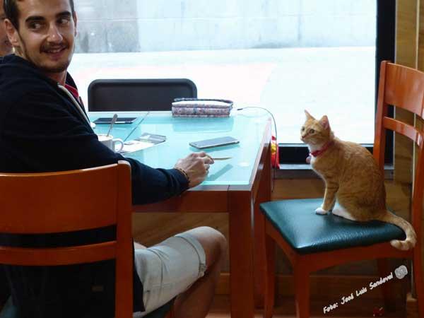 Café con gatos en Las Palmas de Gran Canaria