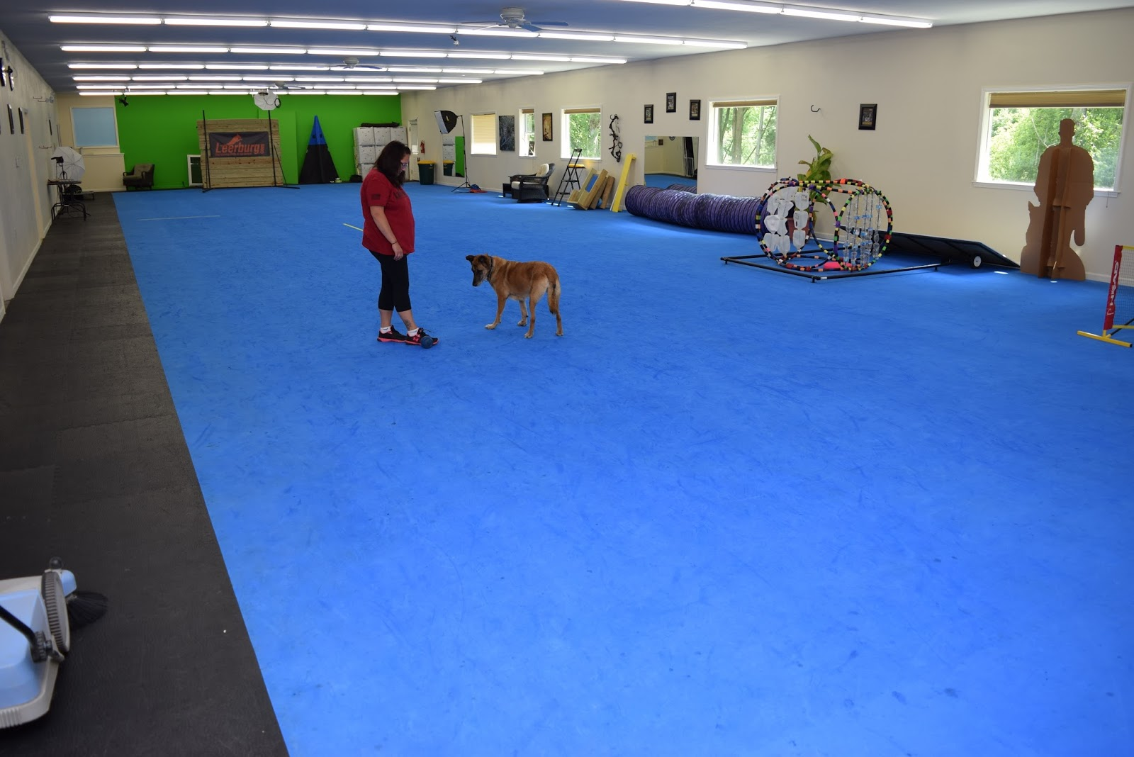 Indoor Dog Training Goldenacresdogs Com