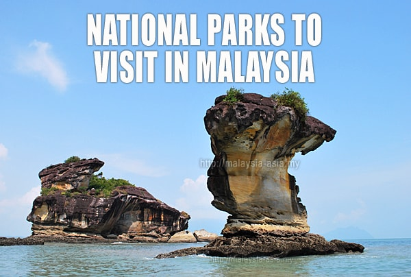 National Parks You Must Visit in Malaysia