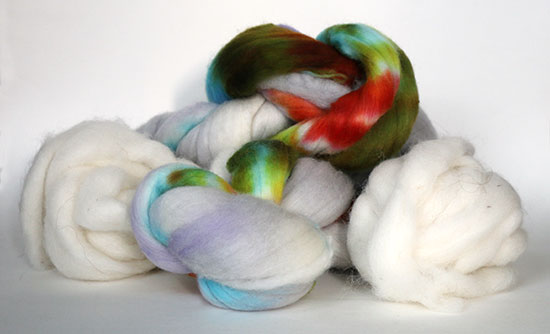 Handpainted Targhee roving and white alpaca roving on a white background.