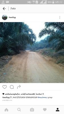 Jabatan dan tugas di perusahaan kelapa sawit
