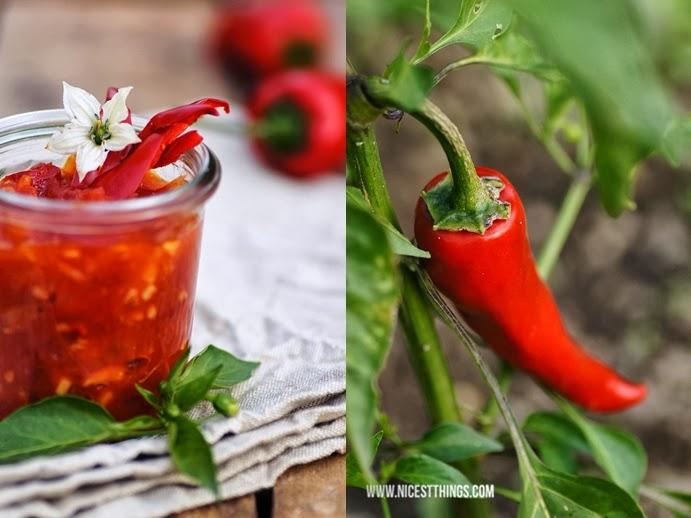 Chili Dip Sauce und Piment D'Espelette Schote am Strauch