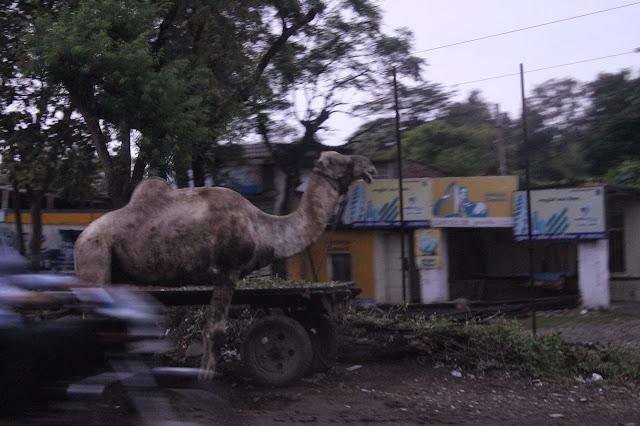 Megan In India Quot Wildlife Quot In India