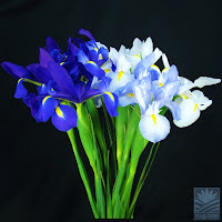blue and white flowers for hanukkah