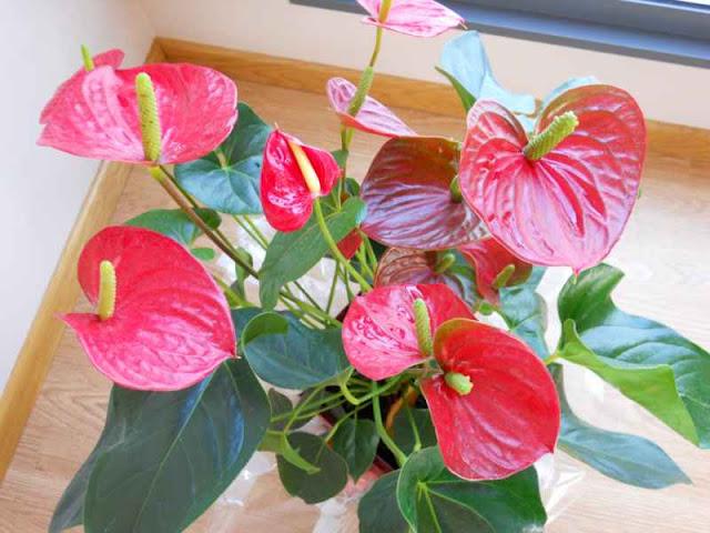 5 plantas que no pueden faltar en tu casa seg n la nasa for Planta decorativa toxica