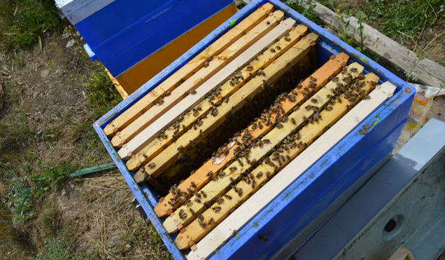 Κατακόρυφη ανάπτυξη διώροφου μελισσιού: Αύξηση γόνου και χτίσιμο πολλών κηρηθρών. Πως το πετυχαίνουμε;