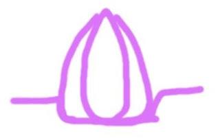 Lavender+Flame Lavender Flame Reiki