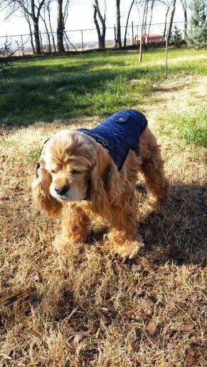 See more Baby,Golden Retriever. Beautiful, it's cold outside!  http://cutepuppyanddog.blogspot.com/