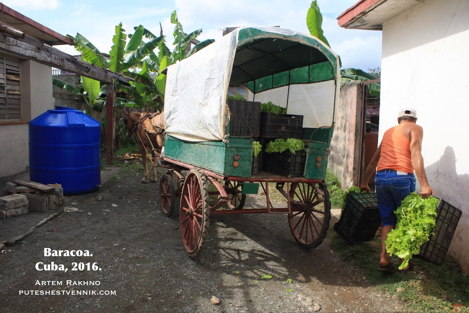 Карета с зеленым салатом на Кубе