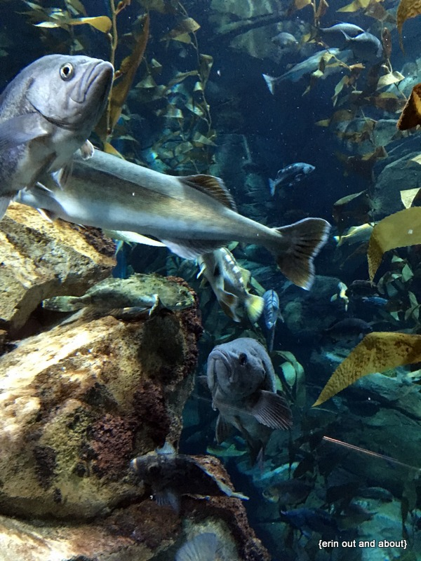 {Erin Out and About} Jazzy fish night at Ripley's Aquarium of Canada