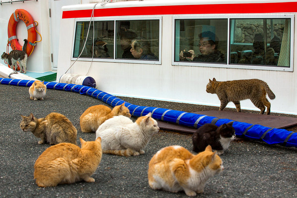 cat invasion