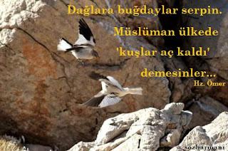 allah, dağlara buğdaylar serpin sözü, hz. muhammed, hz.ali, hz.ebubekir, hz.osman, hz.ömer, islamda hayvan hakları, kuşlar aç kalmasın, merhamet,  resimli sözler, hayvanlarla nasıl helalleşilir, hayvan hakları