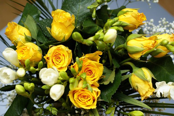 50 most beautiful roses' bouquet | OMUSISA