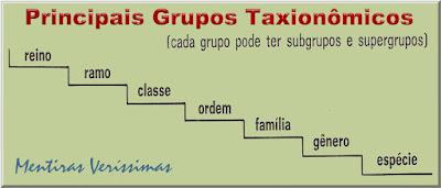 Figura ilustrando as Principais categorias taxionômicas:Espécie, Gênero, Família, Ordem, Classe, Ramo ou filo, Reino