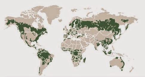 Geopolítica forestal