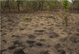 floresta ebola