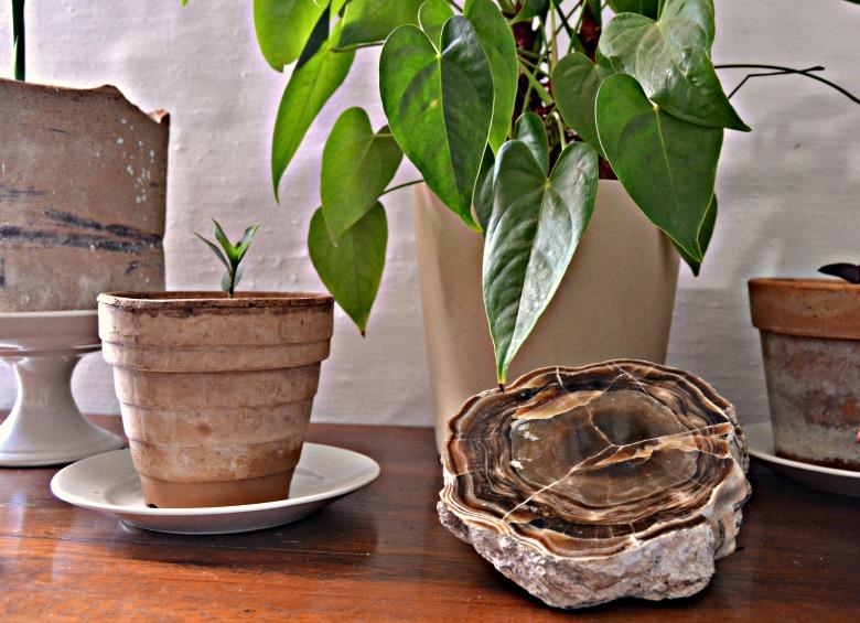 Composición decorativa desde cero en un hall o recibidor con plantas y minerales