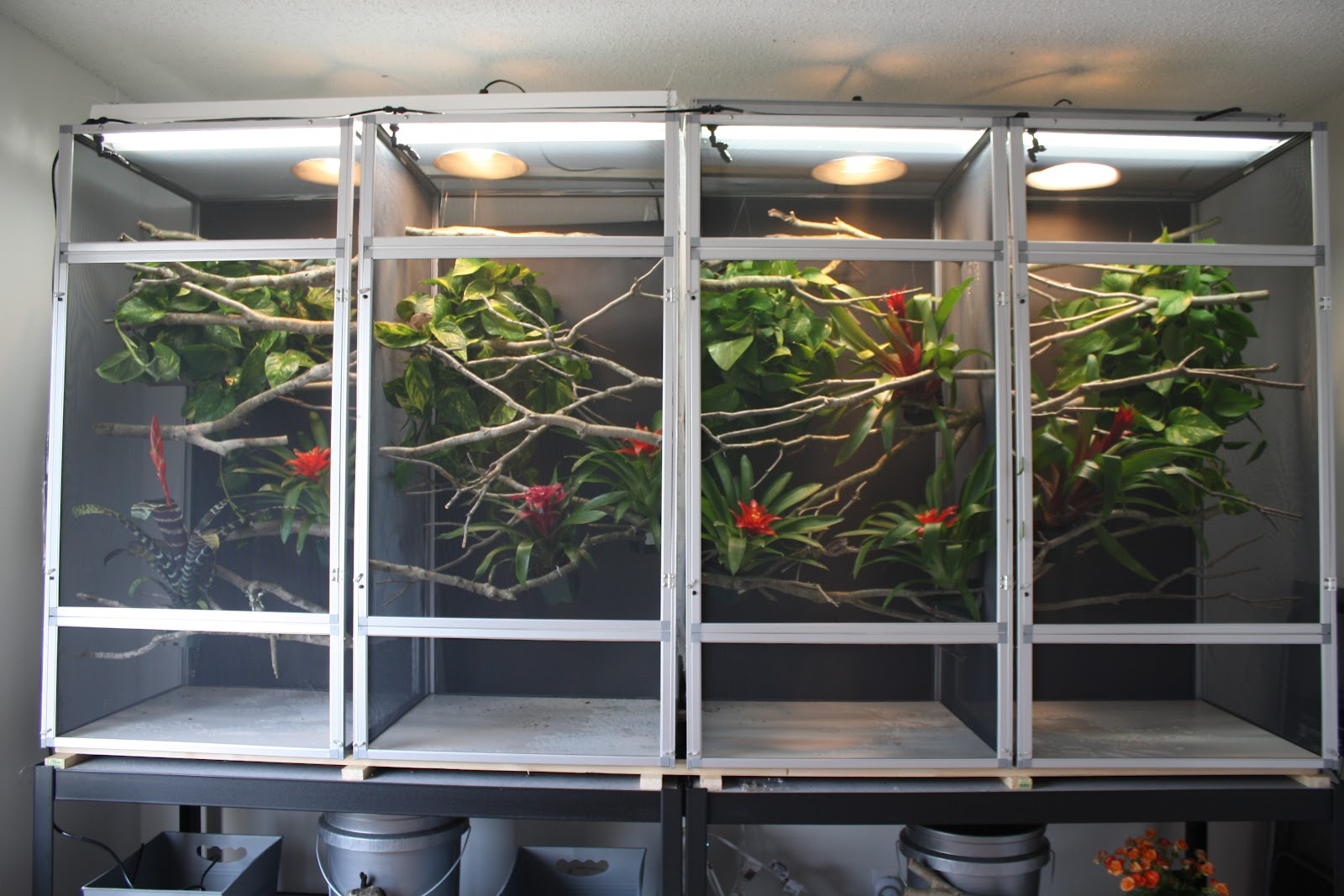 My Chameleon Room Amp Cages Much Ado About Chameleons