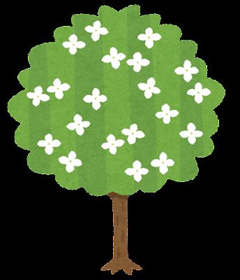 ヤマボウシの木のイラスト