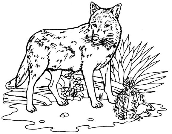 Coloring pages of wolves for Coloring page of a wolf