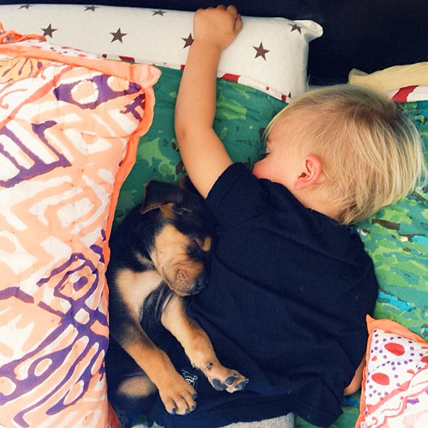 dog and toddler napping together2
