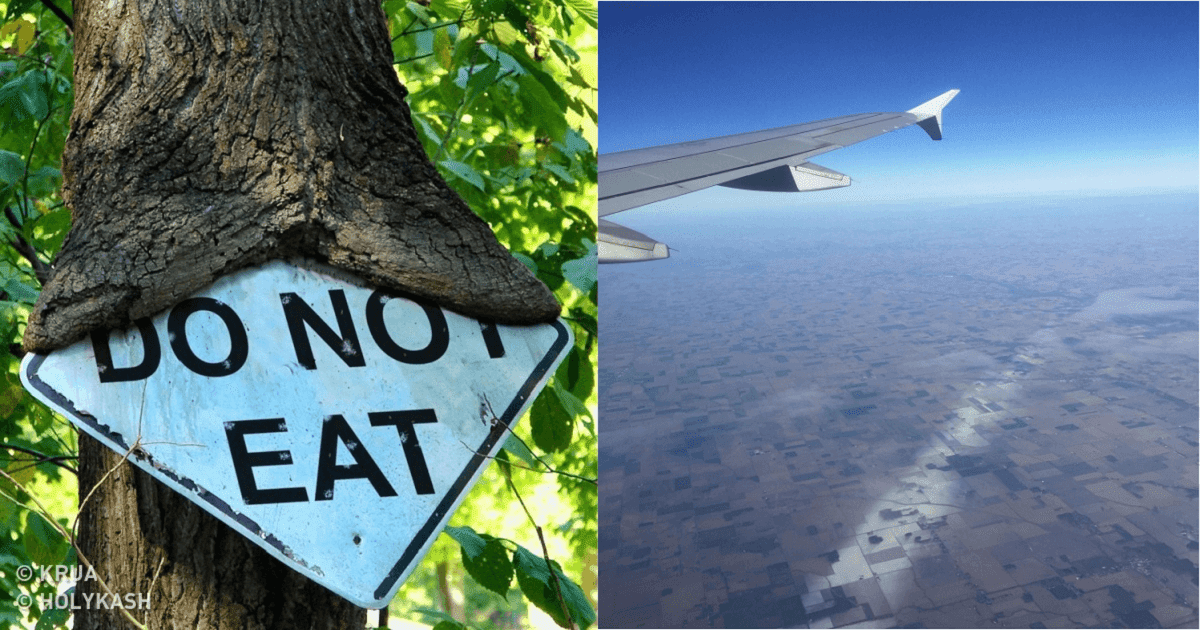 18 Pictures That Show How Nature Secretly Laughs At Us