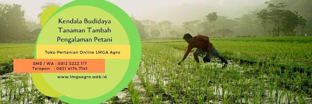 budidaya tanaman,hama tanaman,benih tanaman,usaha pertanian,lmga agro
