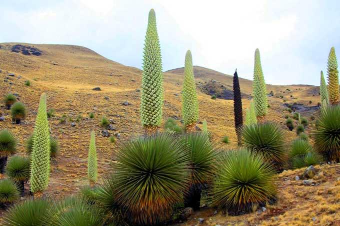 6 Tumbuhan Menakjubkan