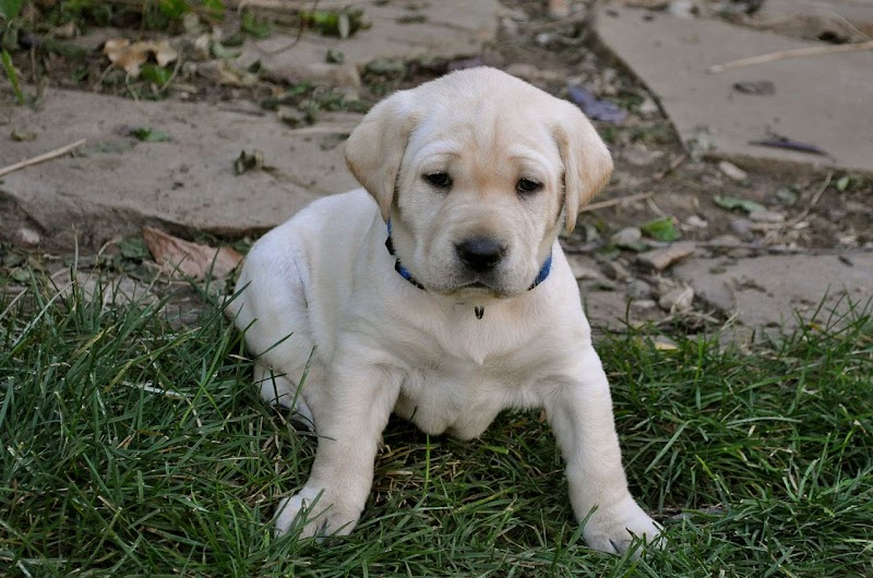 Bringing home a new puppy tips - ultimate Guide