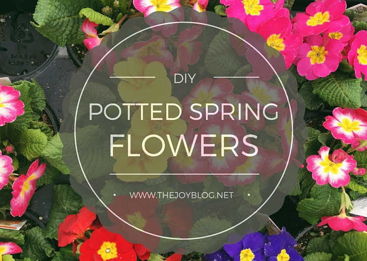 DIY Plant Your Own Spring Flower Pots // WWW.THEJOYBLOG.NET