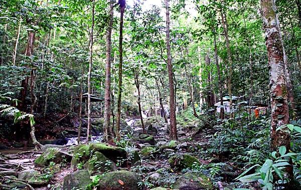 Tekala Forest Reserve