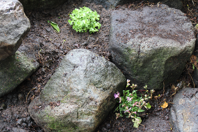 how to create a rockery garden http://www.archieandtherug.com/