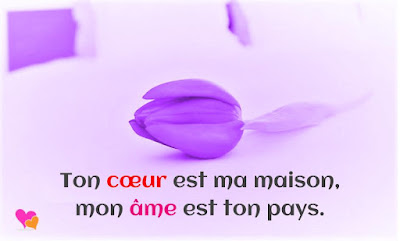 phrase amour