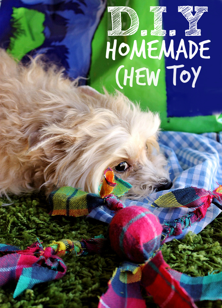 Make this dental approved D.I.Y chew toy for your dog as a reward after good oral care practices! bluestem™ with coactiv+™ water additives and breath sprays can help fight tartar build up and bad breath in your dog. It's a fuss free way to help support healthy oral hygience! #bluestempets #ad