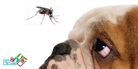 Mosquito da Aedes egypti pode causar doença em cães