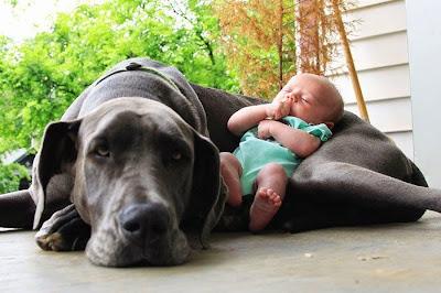 bebe y perro de almuada