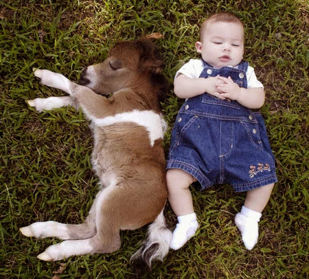 Baby and animals 4