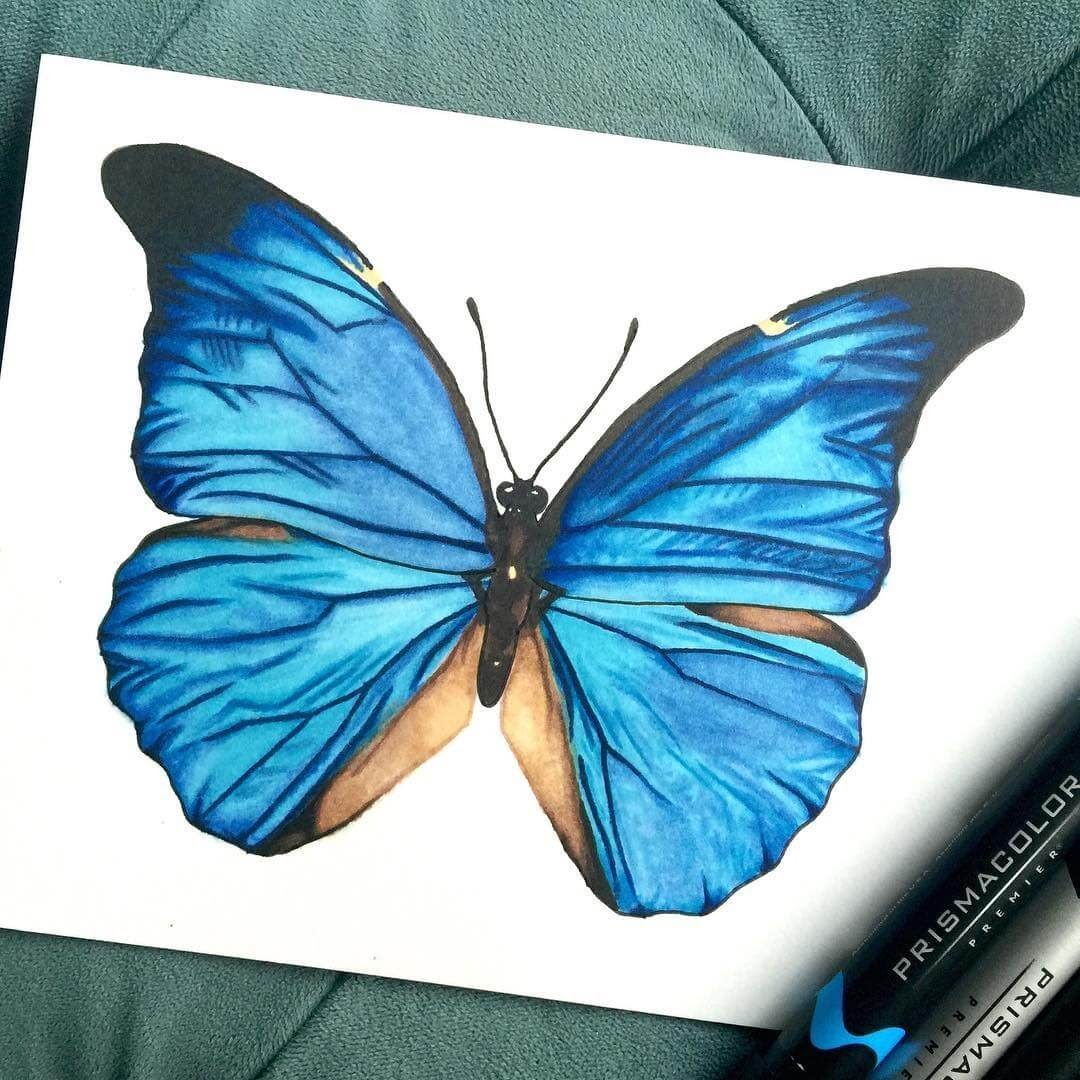 03-Blue-Morpho-Butterfly-Shannon-Mayhew-Drawings-by-Domestic-and-wildlife-Animal-Artist-www-designstack-co