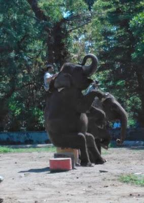 Atraksi-Gajah-GL-Zoo