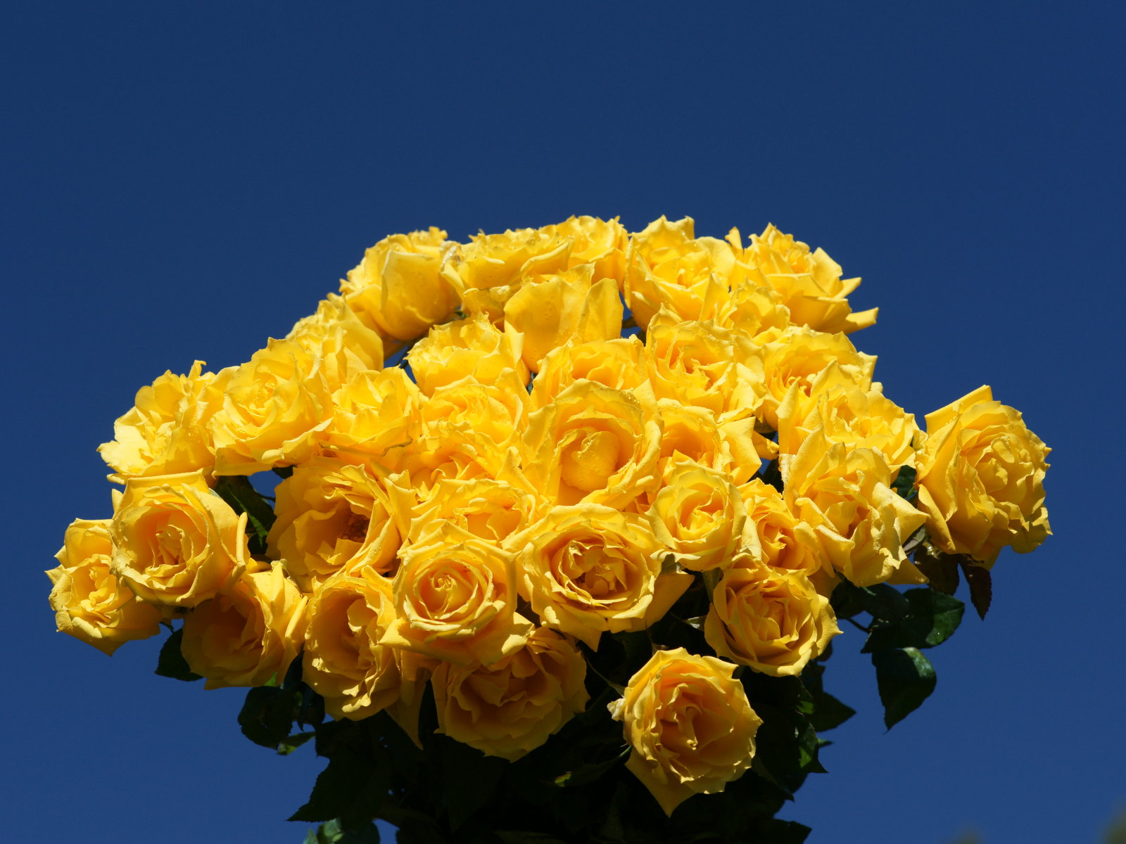 Wedding Flowers Red Amp Yellow Roses For Desktop Background