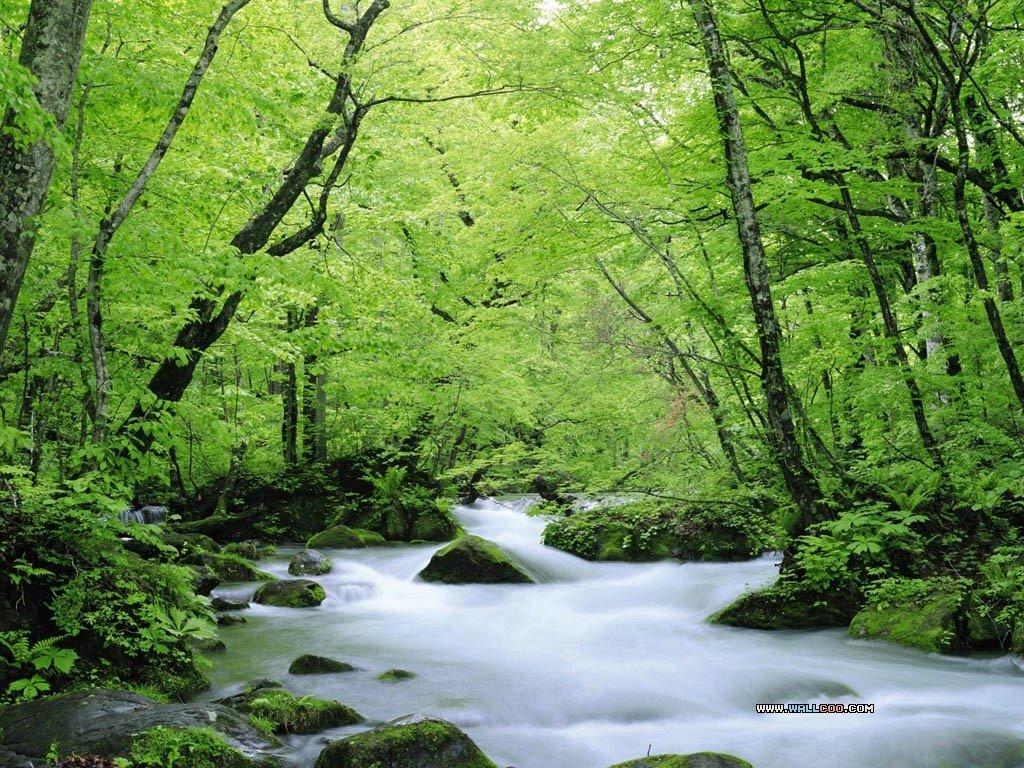 Fotofoto Hutan Yang Indah  Emmethe Share