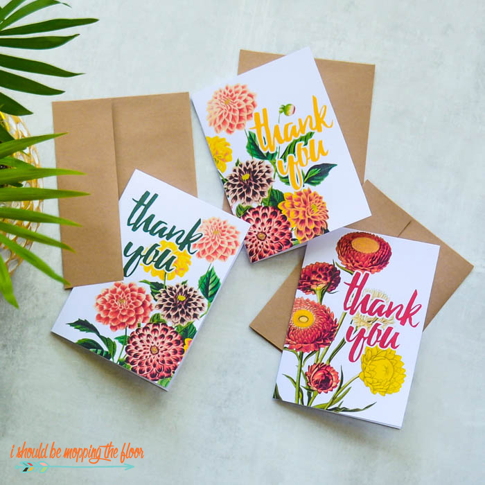 Chrysanthemum Cards