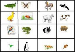 Gambar Binatang Bertelur Dan Beranak