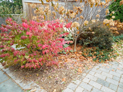 Oakwood Village Toronto Backyard Fall Cleanup before by Paul Jung Gardening Services