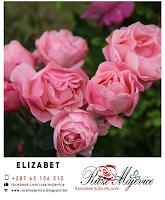 roze ruza elizabet