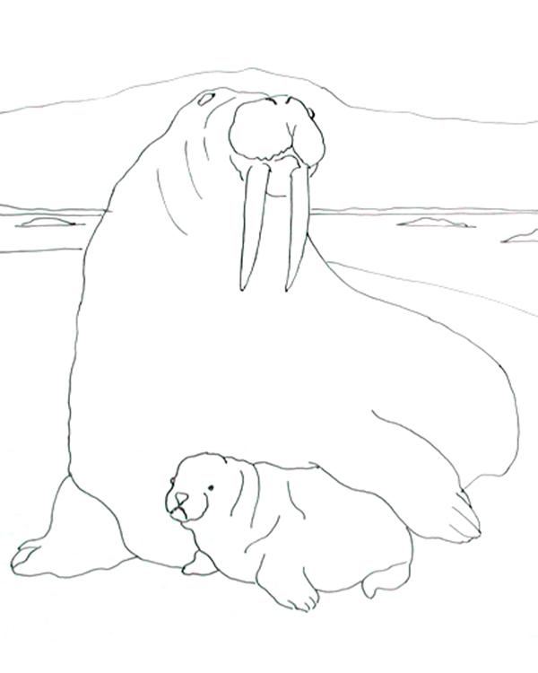 Рисунок моржа и белого медведя