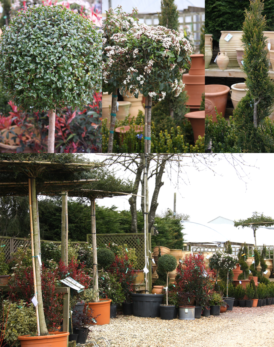 Preston Bissett Nurseries And Country Shop How To Make An Instant Garden