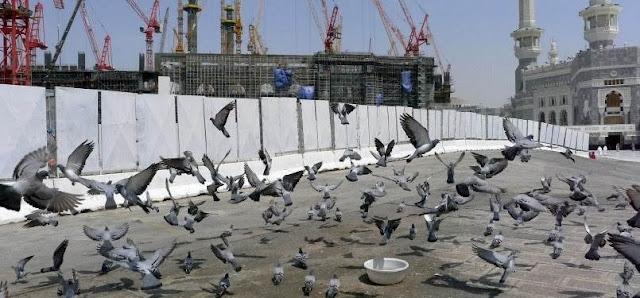Ini Kisah Mengapa Merpati Di Mekkah Bisa Terbang Bebas Dan Tidak Diburu
