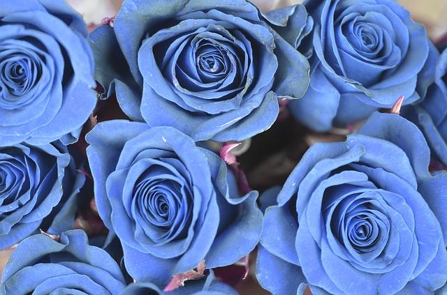 bong hoa hong xanh dep